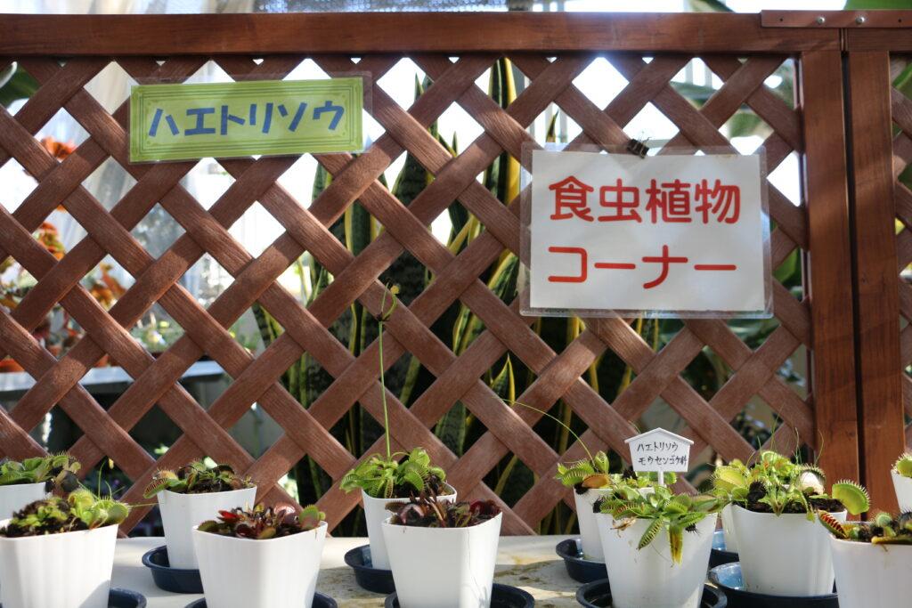 市ノ池公園の食虫食物コーナー