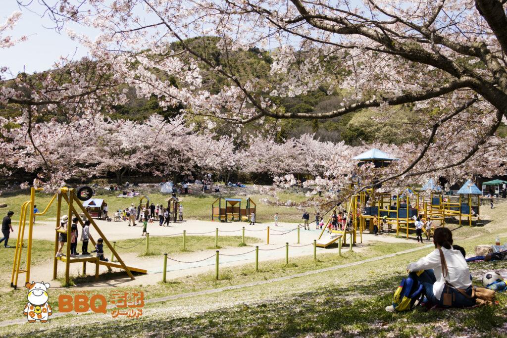 市ノ池公園の芝生広場の桜