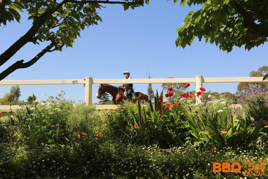 石ヶ谷公園で乗馬体験をしている人
