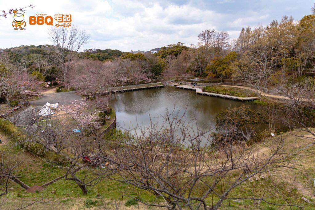奥須磨公園の池と桜