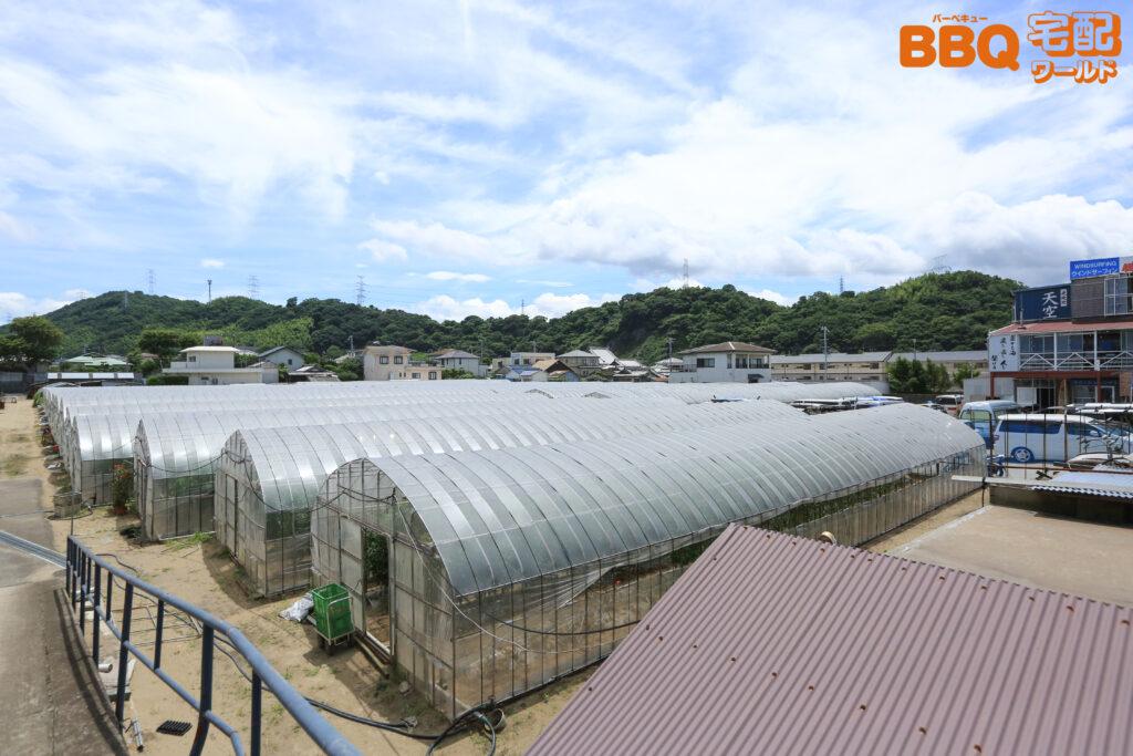 和歌山シーサイドガーデンの農園