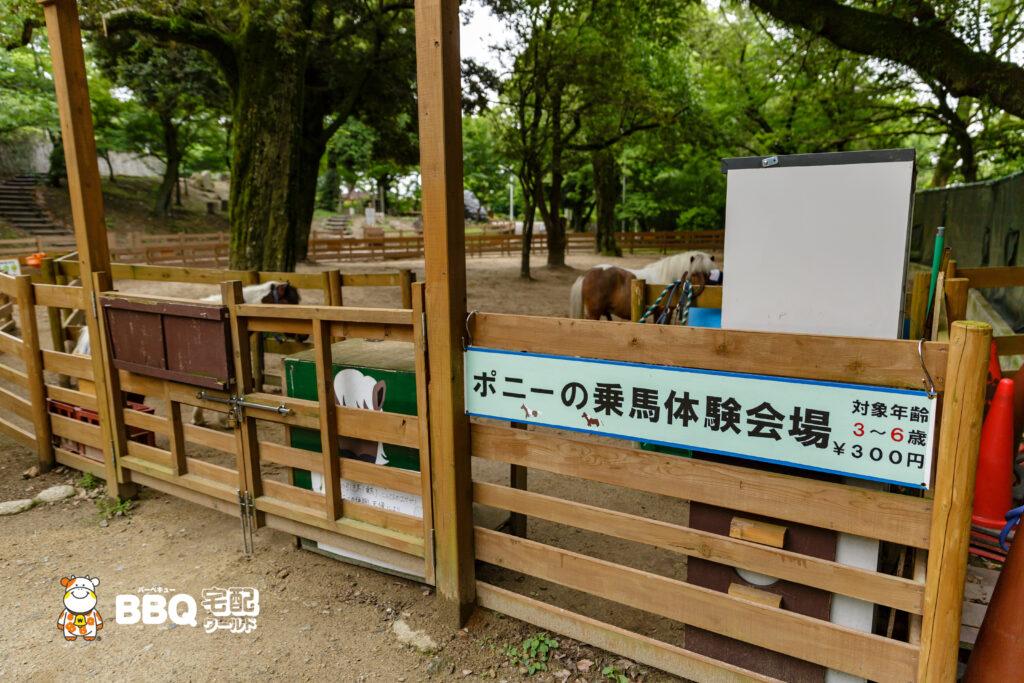 五月山動物園のポニー乗馬体験