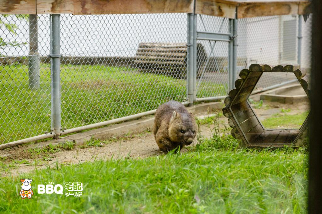 五月山動物園のウォンバット正面