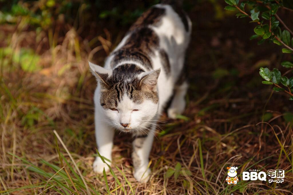 助松公園の眩しそうな猫