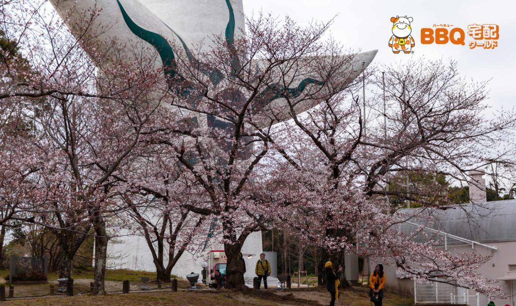 万博公園の桜と太陽の塔