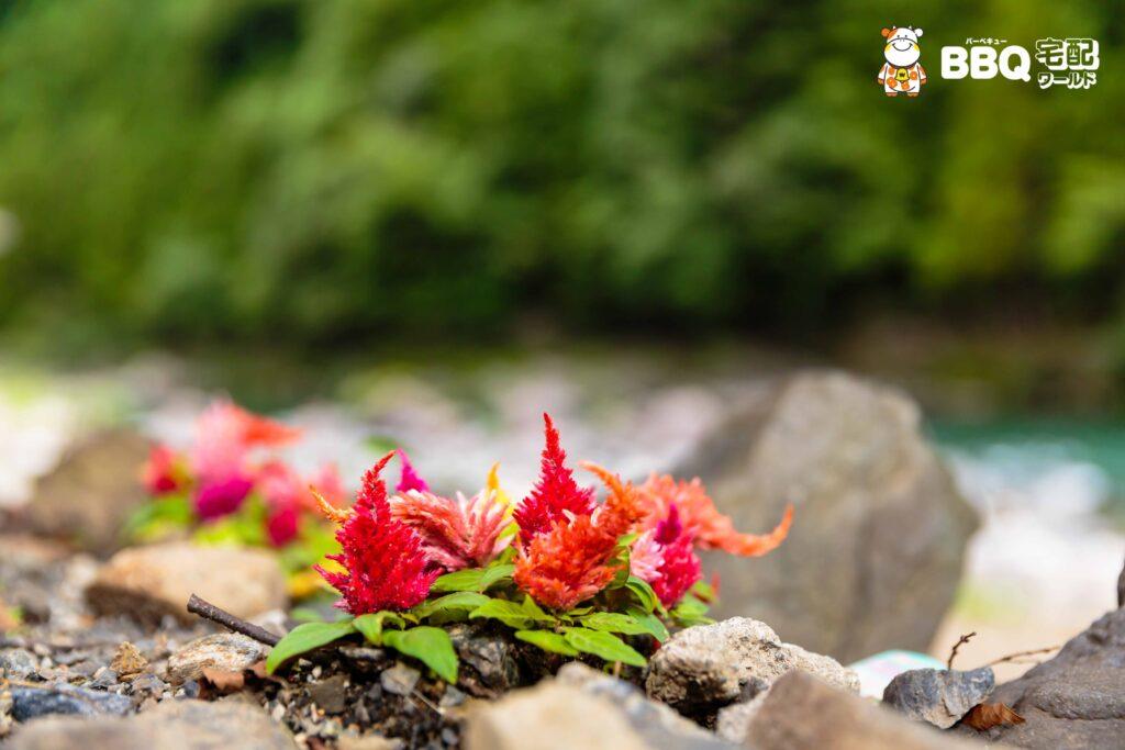 オートキャンプ場庵の郷の花