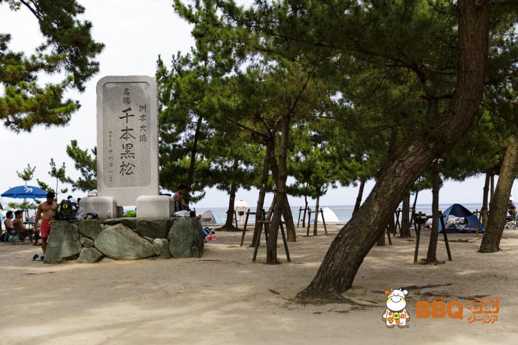 大浜海水浴場の千本黒松