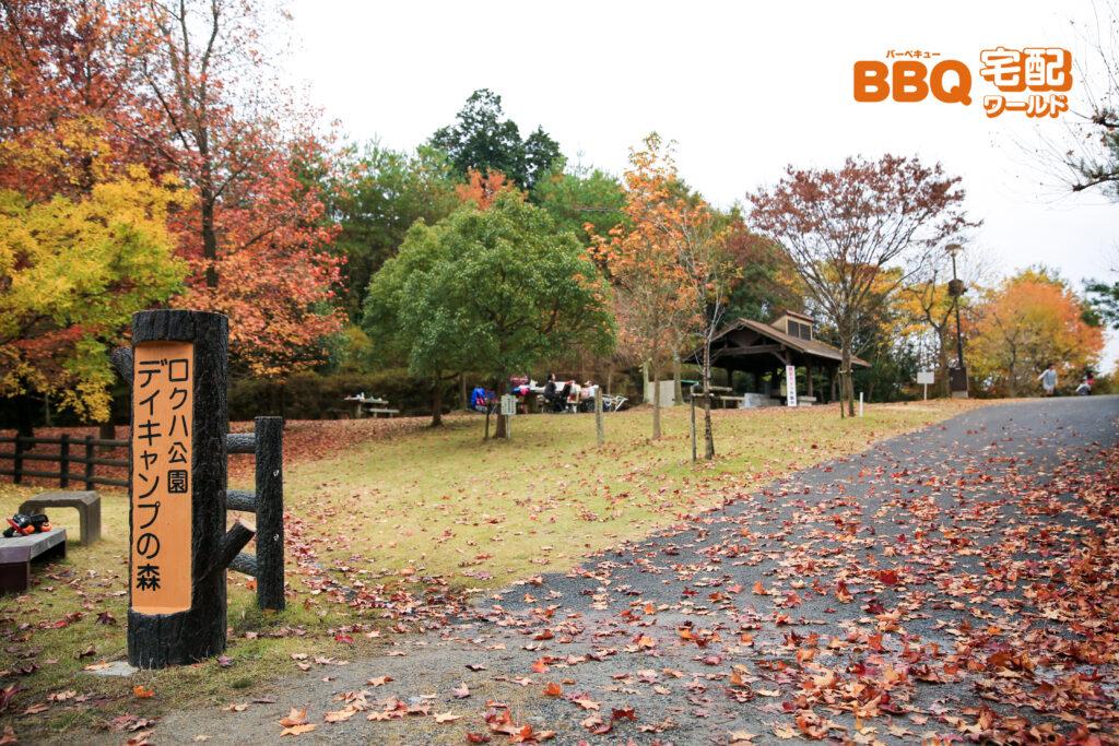 ロクハ公園デイキャンプの森の入口