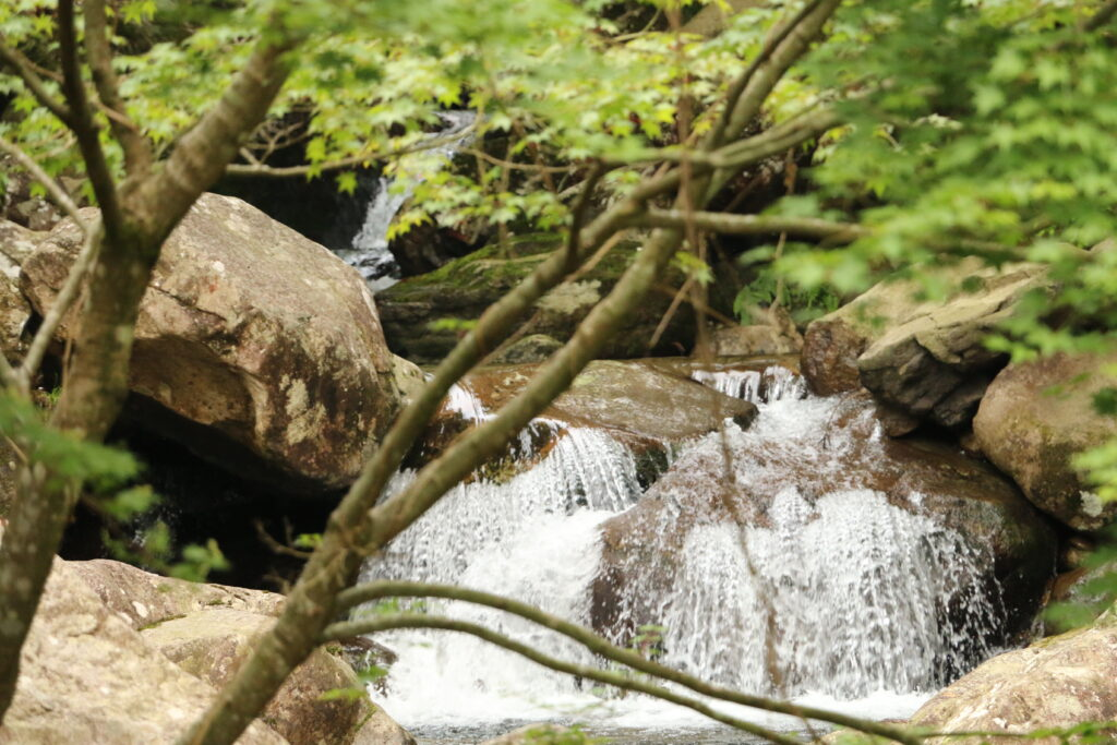 グリーンエコー笠形の渓流