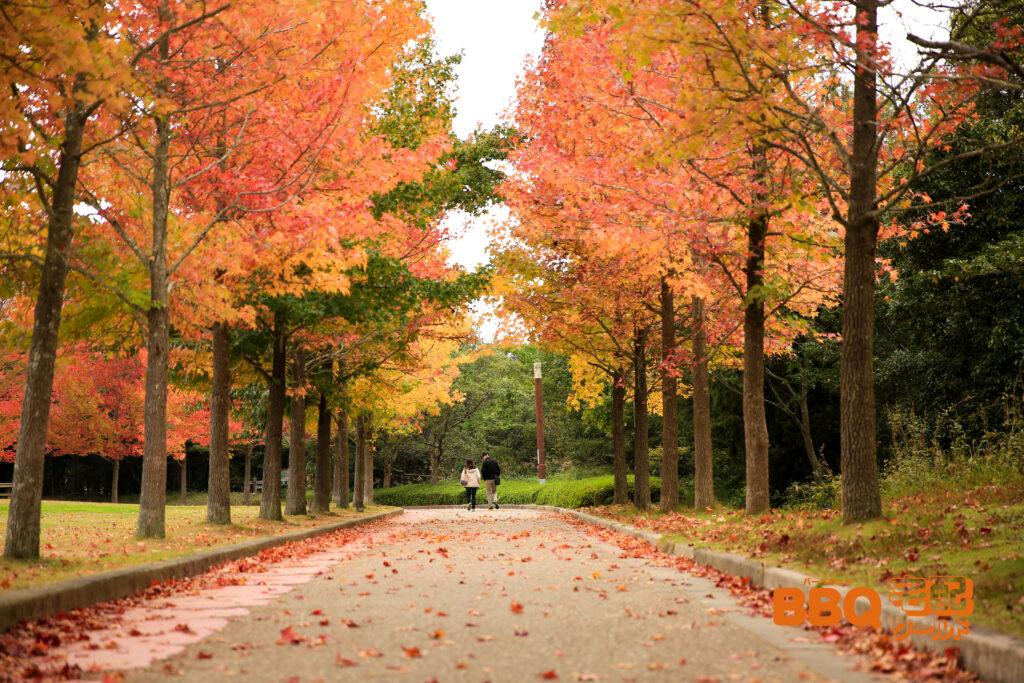 三木山森林公園の並木道