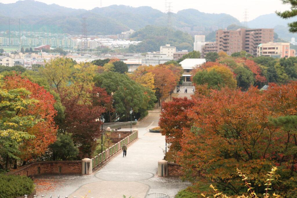 寝屋川公園の紅葉